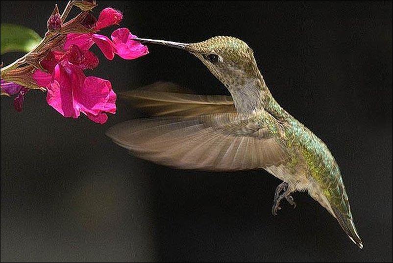 Beauty Things / Самая Маленькая Птица в Мире